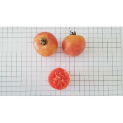Tomàquet de penjar tomacó