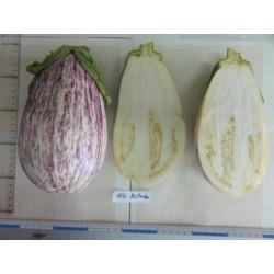Albergínia llistada