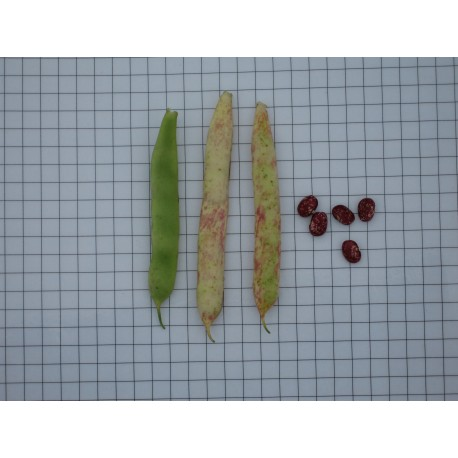 Mongeta sastre
