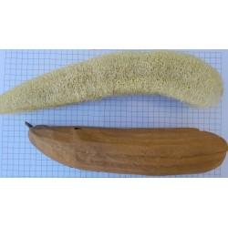 Carbassa esponja - lufa