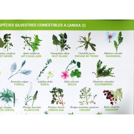 Poster Espècies silvestres comestibles a l'Anoia (I)