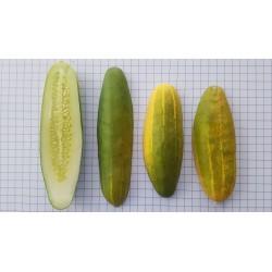 Cogombre groc