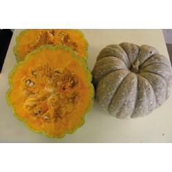 Carbassa taronja - C.maxima