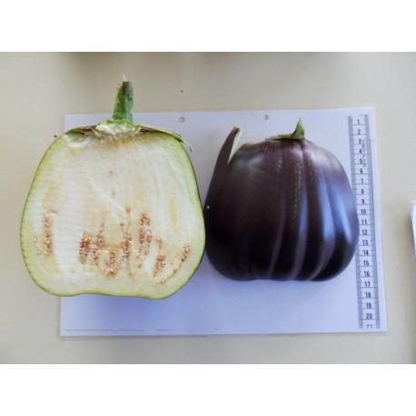 Albergínia Figuig